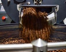 Coffee Dealer com torrefação própria